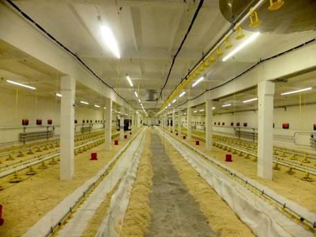 Система светодиодного освещения TESLA для напольного содержания птицы.